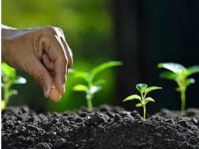 Planting Our Church … Again