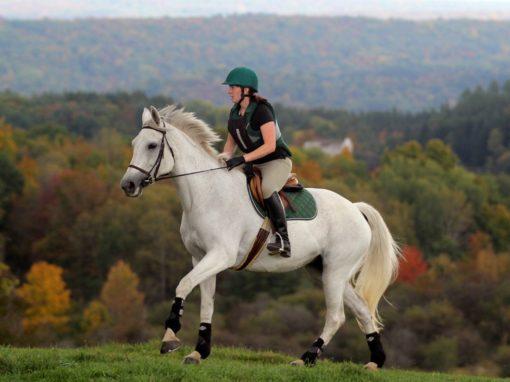 Houghton equestrian facility top 20 nationally
