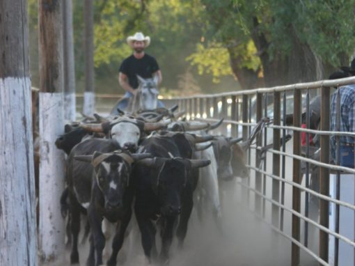 Small church has big impact on well-known Kansas rodeo
